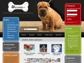 Azyl dla miłośników psów, tutaj psy skupiają społeczność.