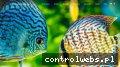 Blog akwarystyczny i atlas ryb - Podwodne Królestwo